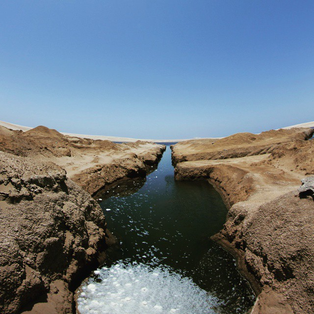 Paracas protected Bay is the habitat of numerous species andhellip