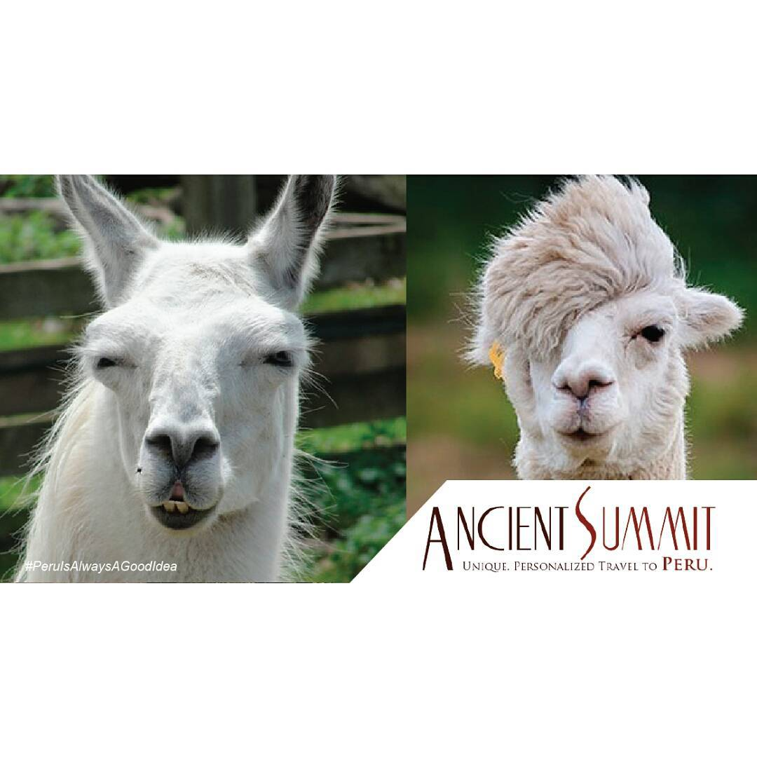 Visit our blog and check out these funnyllamas that willhellip