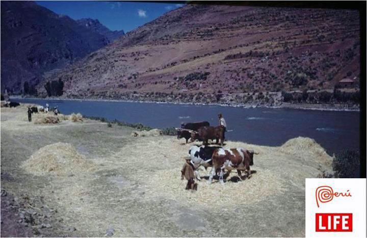 Pisac-agriculture-peru-inca-travel
